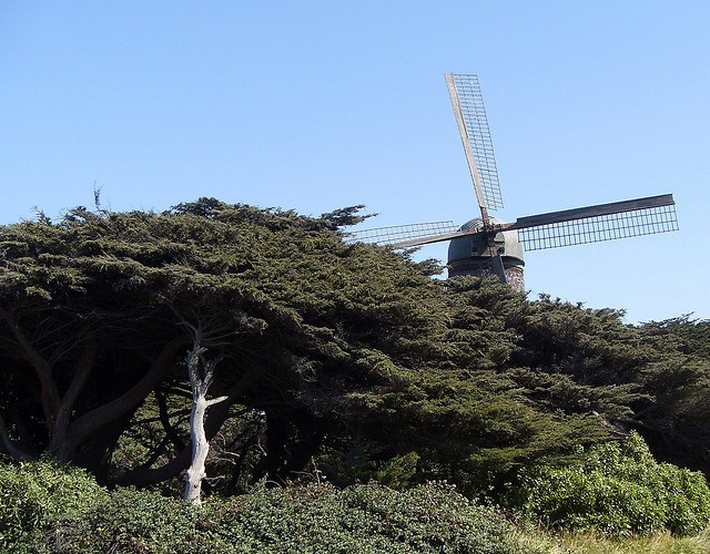 Lloyd Lake and Dutch Windmill in Golden Gate Park (Sundays In My City)