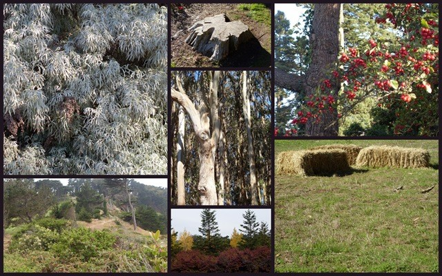 Collage of greenery in San Francisco