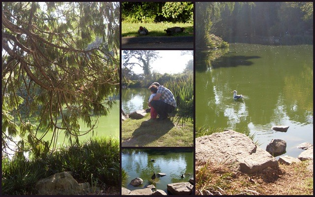San Francisco Pond Collage