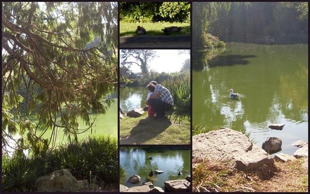 San Francisco Pond Collage