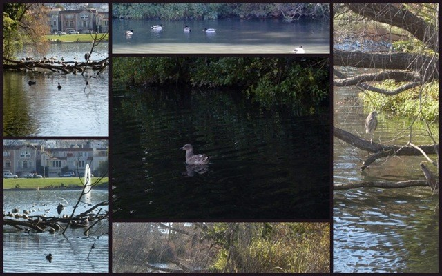 Collage of reflection pond at Palace of Fine Arts