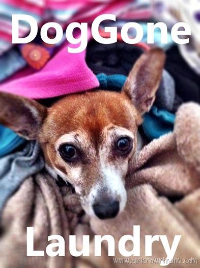 DogGone-Laundry