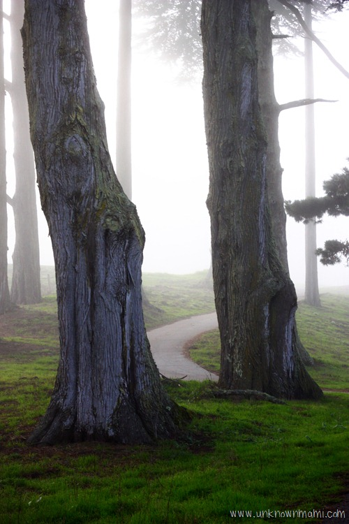 Trees-in-fog
