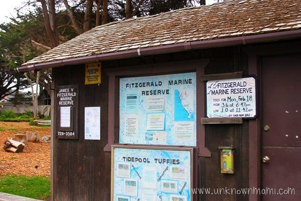Fitzgerald-Marine-Reserve