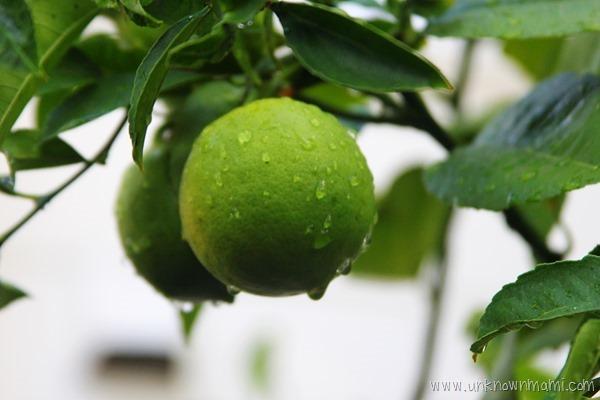Lemons with rain on them