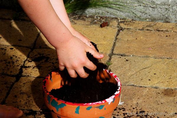 putting soil in pot