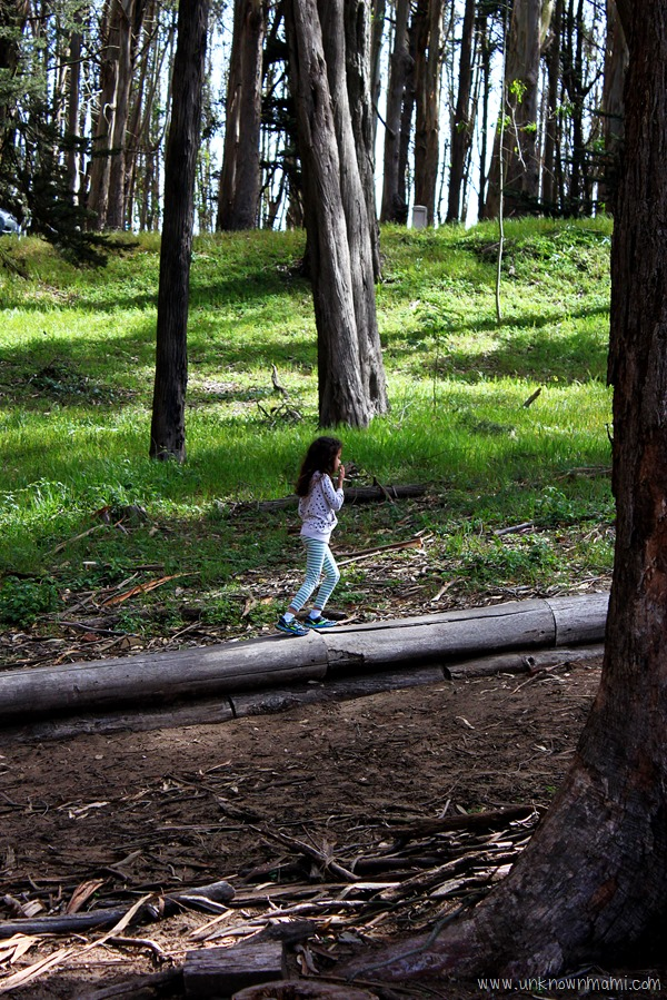 Walking the Wood Line in the Presidio