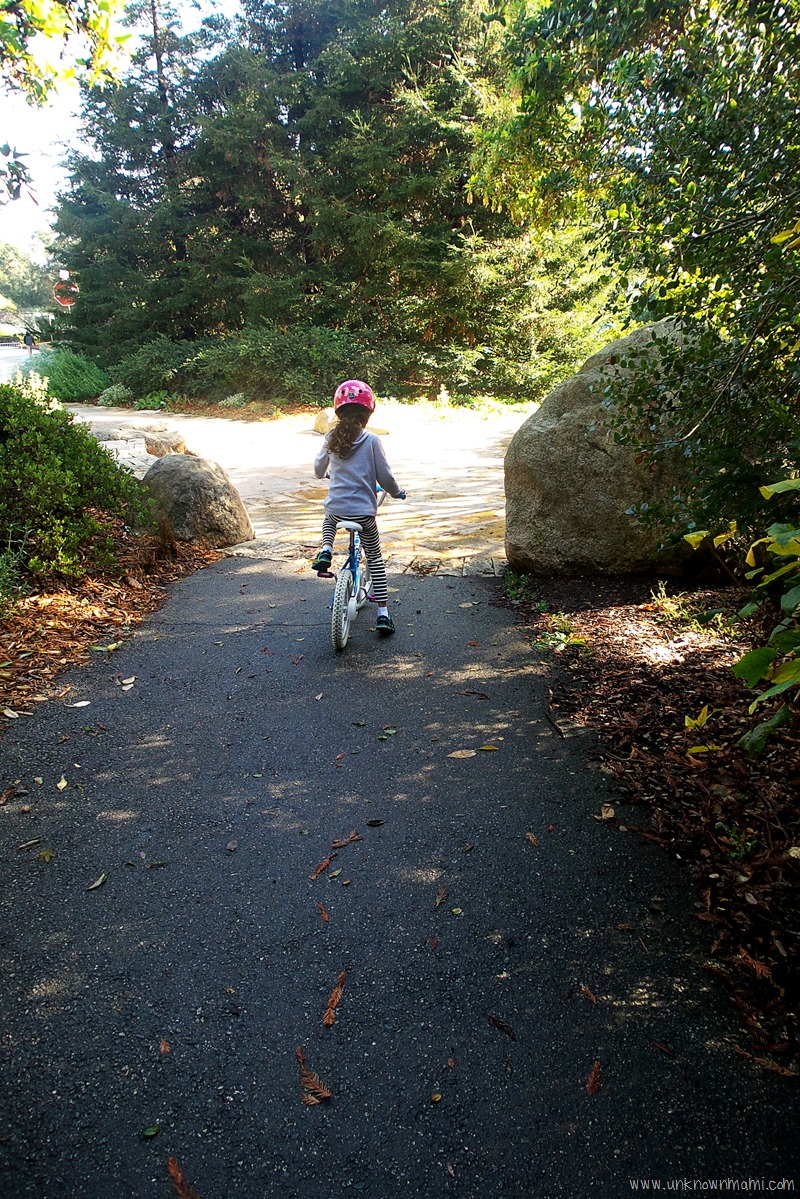 Bike riding in Golden Gate Park
