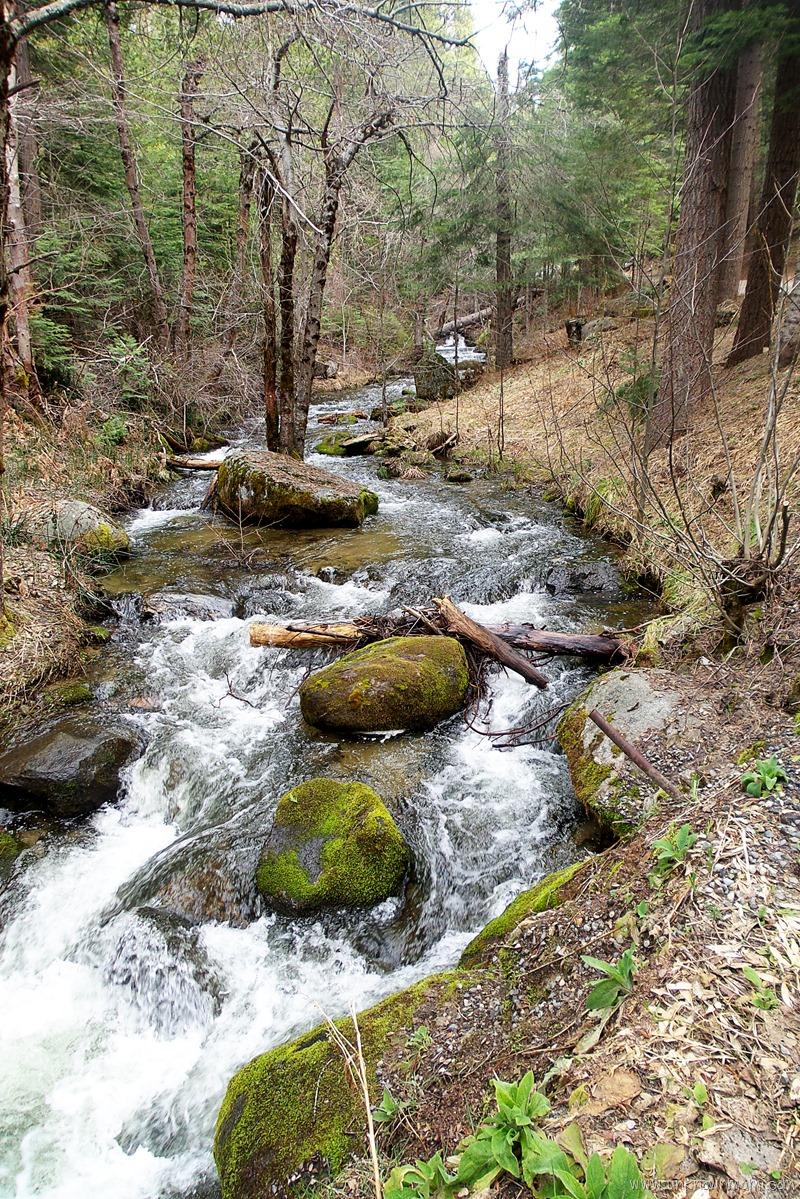 Lewis Creek, Sugar Pine