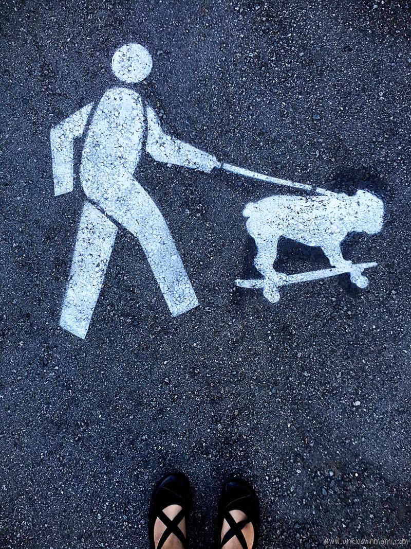 Skateboarding dog on leash
