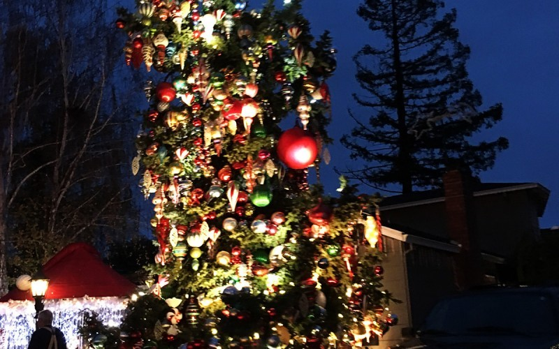 Christmas Tree Lane in San Carlos (Sundays In My City)
