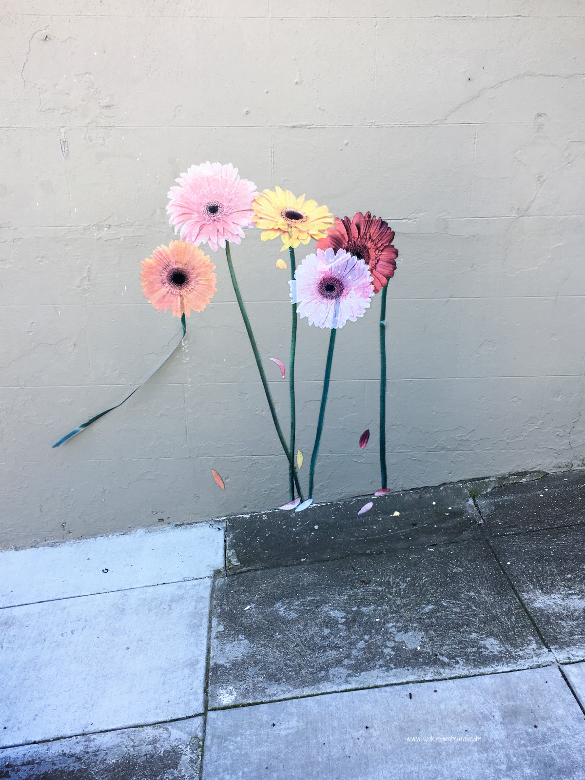 Gerbera Daisies on a wall